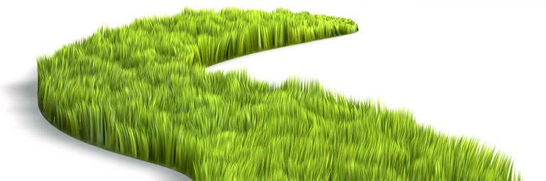 17-grass