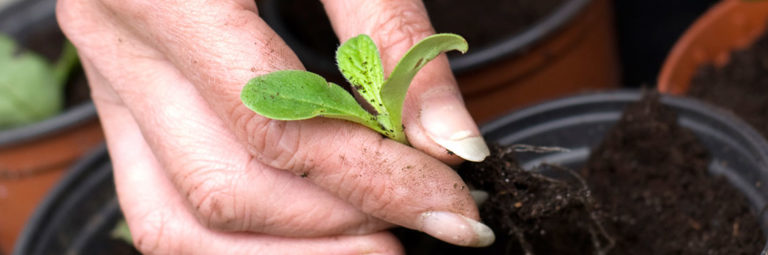 27-planting