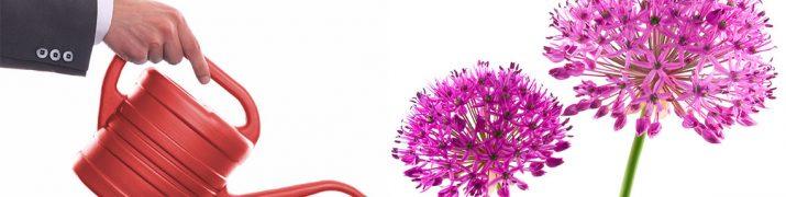 10 conseils pour optimiser vos programmes de <em>lead nurturing</em>