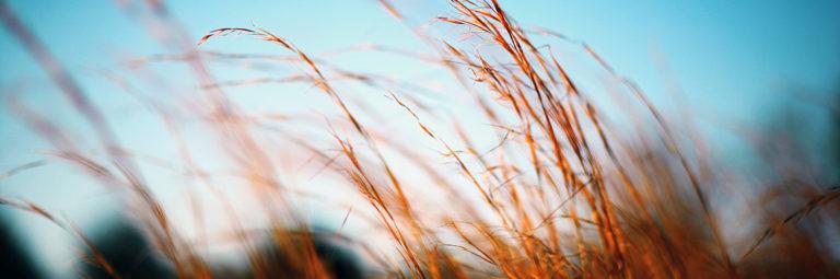 Photo d'épis de blé de Casey Lee sur Unsplash