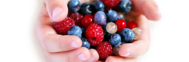 08-fruits