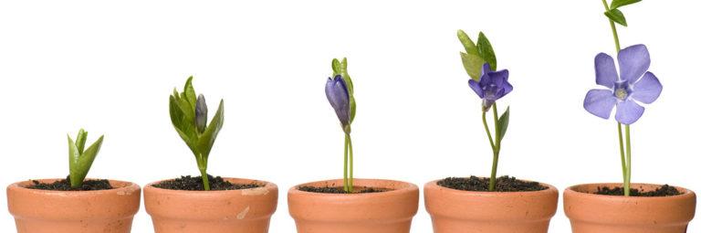 15-flower-pots