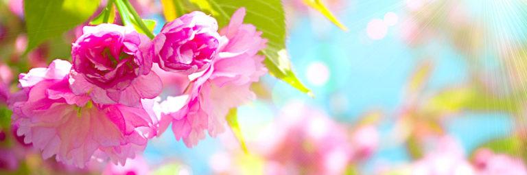 19-flowers